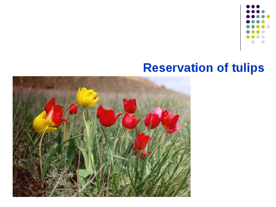 Reservation of tulips
