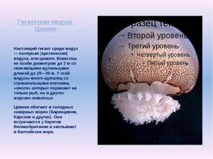 Гигантская медуза Цианея Настоящий гигант среди медуз — полярная (арктическая