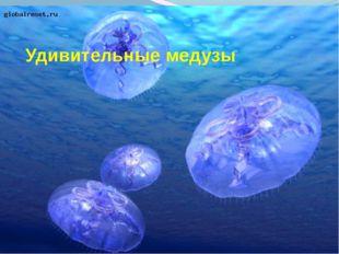 Удивительные медузы