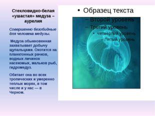 Стекловидно-белая «ушастая» медуза – аурелия Совершенно безобидные для челове