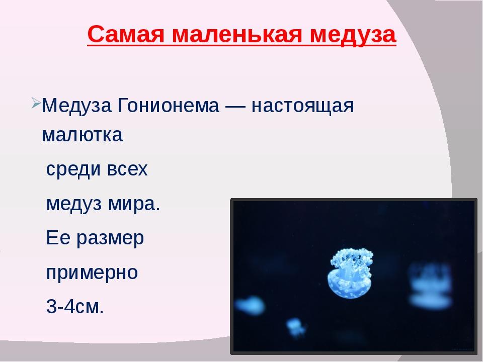 Самая маленькая медуза Медуза Гонионема — настоящая малютка среди всех медуз...