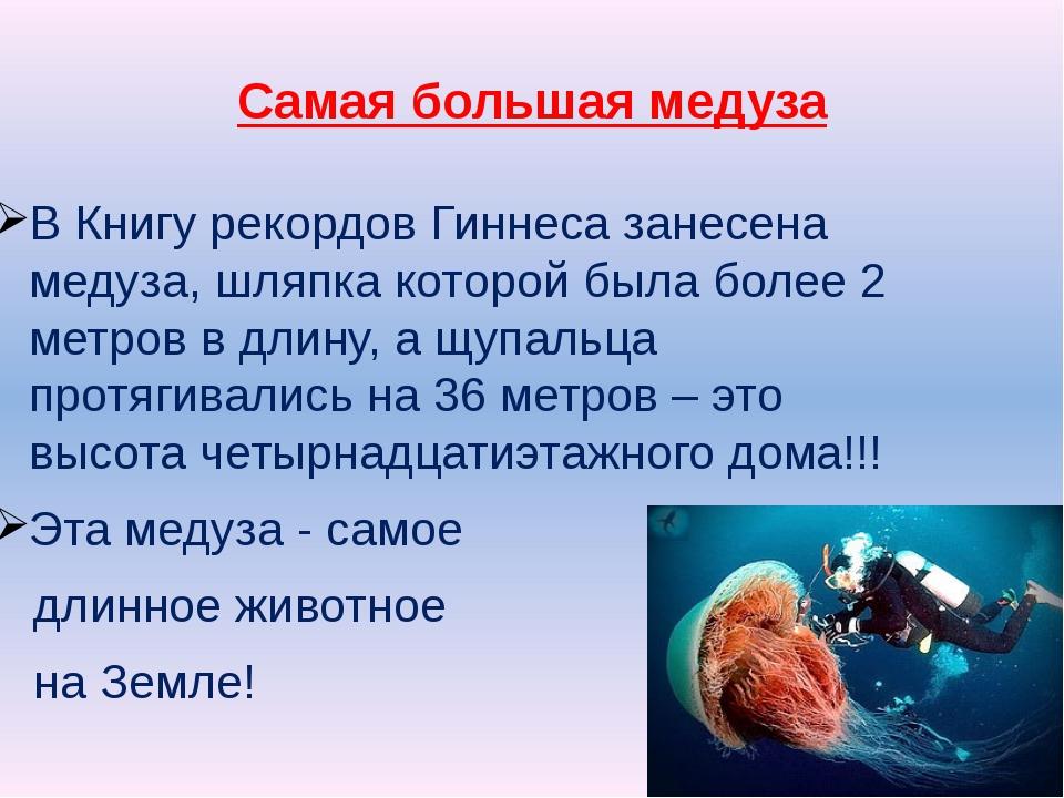 Самая большая медуза В Книгу рекордов Гиннеса занесена медуза, шляпка которой...