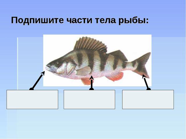 Подпишите части тела рыбы: Г О Л О В А Х В О С Т Т У Л О В И Щ Е