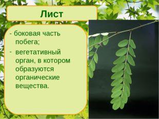 - боковая часть побега; вегетативный орган, в котором образуются органические