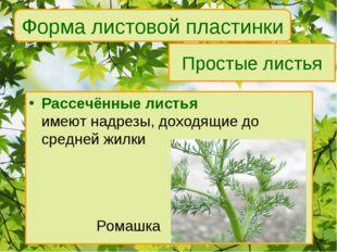 Простые листья Рассечённые листья имеют надрезы, доходящие до средней жилки