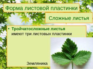 Сложные листья Тройчатосложные листья имеют три листовых пластинки Земляни