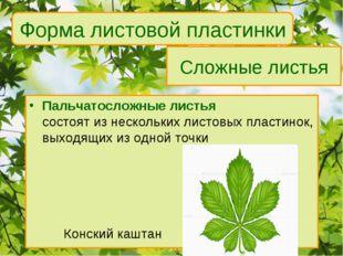 Сложные листья Пальчатосложные листья состоят из нескольких листовых пластино