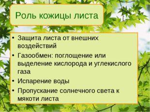 Защита листа от внешних воздействий Газообмен: поглощение или выделение кисло
