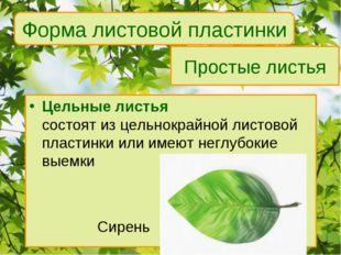 Простые листья Цельные листья состоят из цельнокрайной листовой пластинки или
