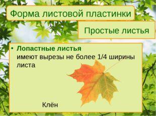 Простые листья Лопастные листья имеют вырезы не более 1/4 ширины листа Клё