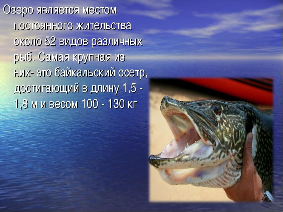Озеро является местом постоянного жительства около 52 видов различных рыб. Са...