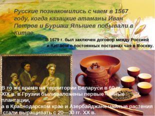 Русские познакомились с чаем в 1567 году, когда казацкие атаманы Иван Петров