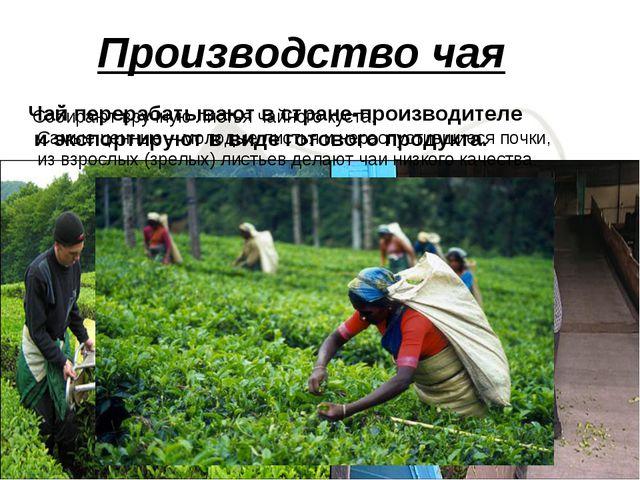 Чай перерабатывают в стране-производителе и экспортируют в виде готового прод...