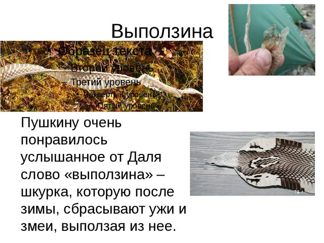 Выползина Пушкину очень понравилось услышанное от Даля слово «выползина» – шк...