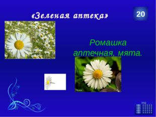 «Сохраним природу» Экология 5 Категория Ваш ответ