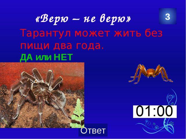 «Зеленая аптека» Название этого растения говорит само за себя – оно лечит мно...