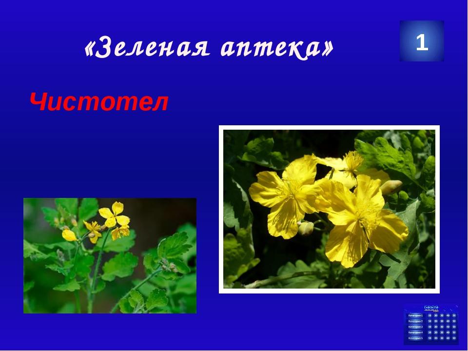 «Сохраним природу» Канцерогены 3 . Категория Ваш ответ