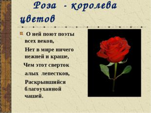 Роза - королева цветов О ней поют поэты всех веков, Нет в мире ничего нежней