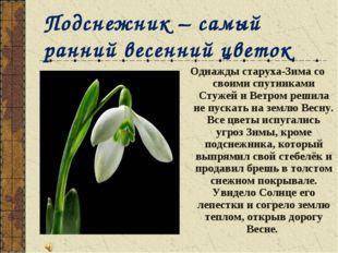 Подснежник – самый ранний весенний цветок Однажды старуха-Зима со своими спут