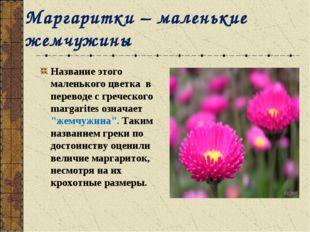 Маргаритки – маленькие жемчужины Название этого маленького цветка в переводе