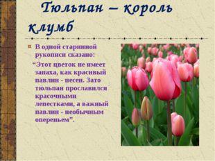 """В одной старинной рукописи сказано: """"Этот цветок не имеет запаха, как красивы"""