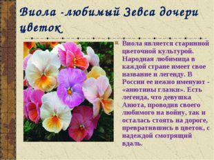 Виола -любимый Зевса дочери цветок Виола является старинной цветочной культур