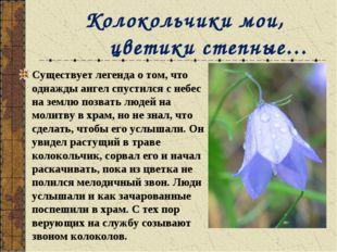 Колокольчики мои, цветики степные… Существует легенда о том, что однажды анг