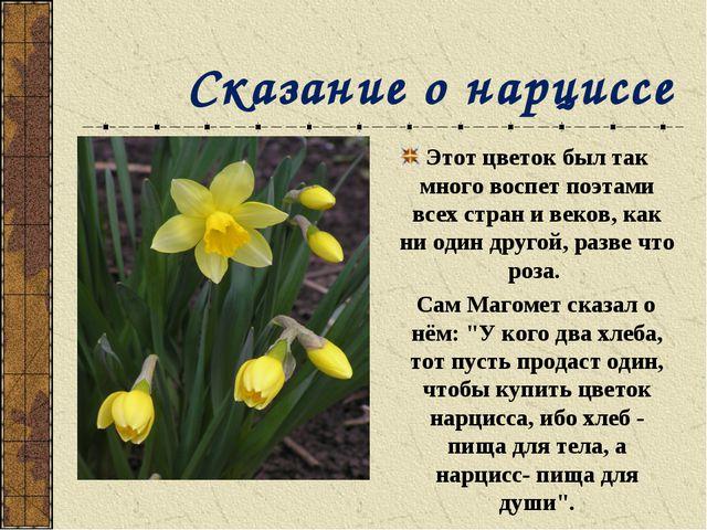 Сказание о нарциссе Этот цветок был так много воспет поэтами всех стран и ве...
