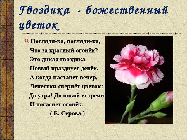 Гвоздика - божественный цветок Погляди-ка, погляди-ка, Что за красный огонёк?...