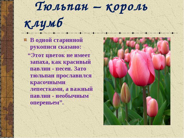 """В одной старинной рукописи сказано: """"Этот цветок не имеет запаха, как красивы..."""