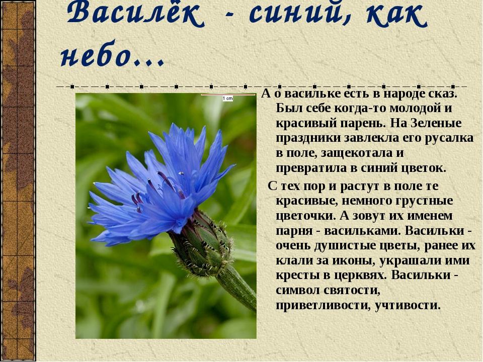 Василёк - синий, как небо… А о васильке есть в народе сказ. Был себе когда-т...