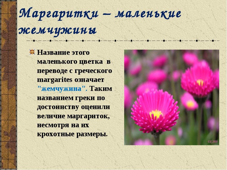 Маргаритки – маленькие жемчужины Название этого маленького цветка в переводе...