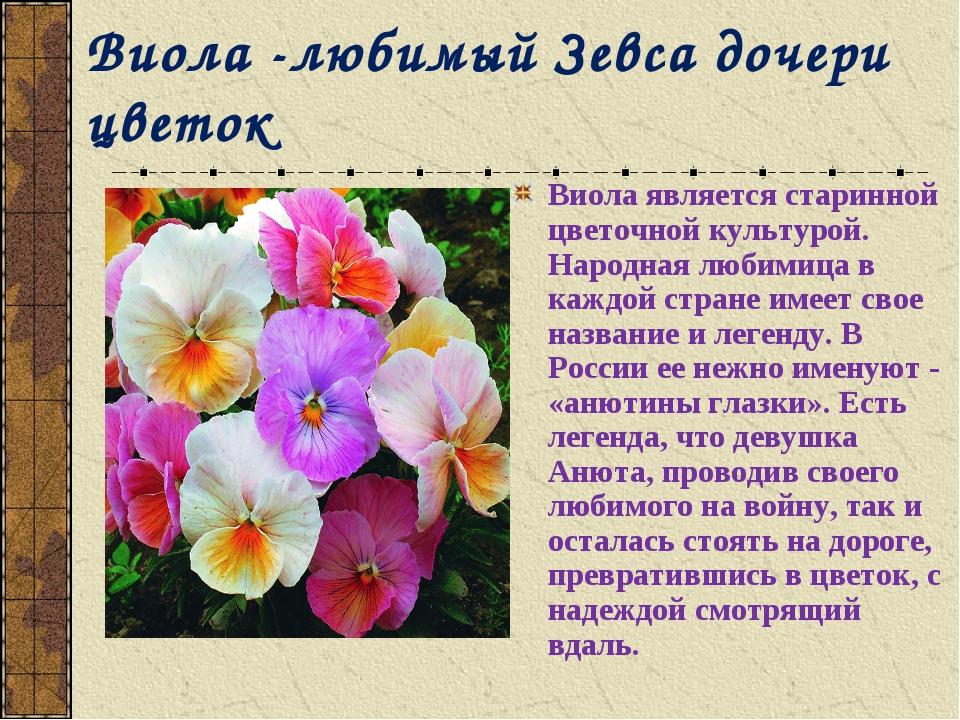 Виола -любимый Зевса дочери цветок Виола является старинной цветочной культур...
