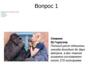 Вопрос 1 Какаяобезьянасамая крупная в мире? а) Бабуин; б) Горилла; в) Шимпа