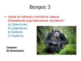 Вопрос 3 Какая изобезьянсчитается самым ближайшим родственником человека? а