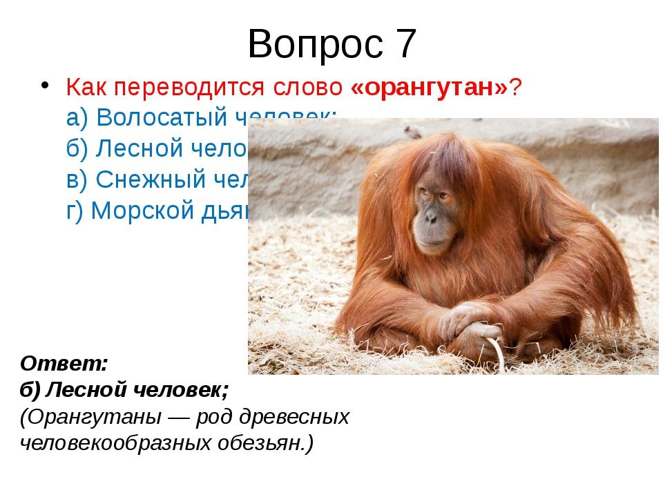 Вопрос 7 Как переводится слово«орангутан»? а) Волосатый человек; б) Лесной ч...