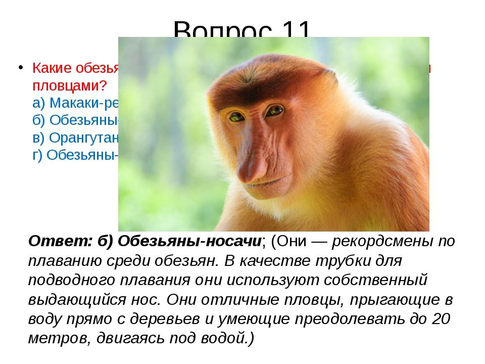 Вопрос 11 Какиеобезьянысчитаются лучшими в мире среди обезьян пловцами? а)...