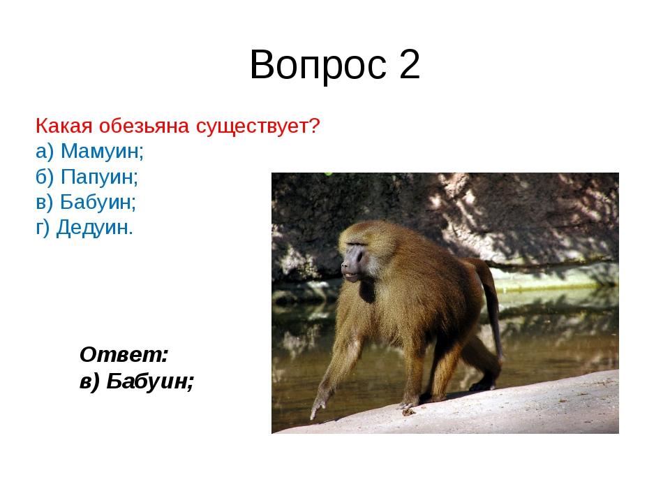 Вопрос 2 Какаяобезьянасуществует? а) Мамуин; б) Папуин; в) Бабуин; г) Дедуи...