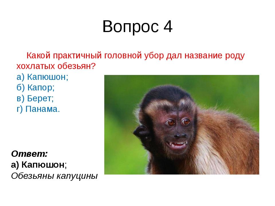 Вопрос 4 Какой практичный головной убор дал название роду хохлатыхобезьян? а...