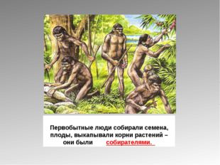 Первобытные люди собирали семена, плоды, выкапывали корни растений – они были