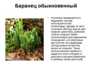 Баранец обыкновенный Растение применяется в медицине, иногда используется как