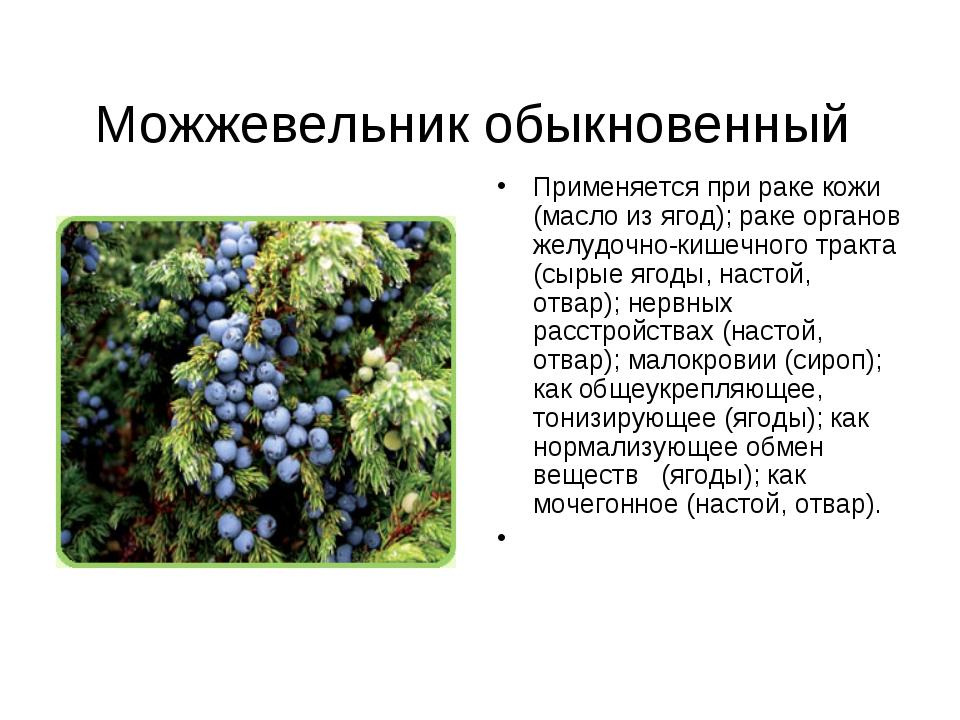 Можжевельник обыкновенный Применяется при раке кожи (масло из ягод); раке о...