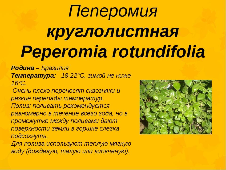 Пеперомия круглолистная Peperomia rotundifolia Родина – Бразилия Температура:...