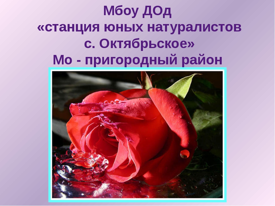 Мбоу ДОд «станция юных натуралистов с. Октябрьское» Мо - пригородный район