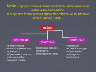Мейоз – процесс деления клетки, при котором число хромосом в клетке уменьшает