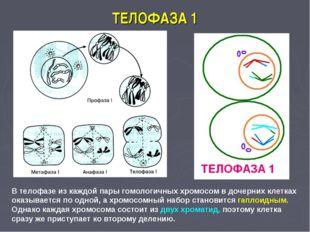 ТЕЛОФАЗА 1 В телофазе из каждой пары гомологичных хромосом в дочерних клетках