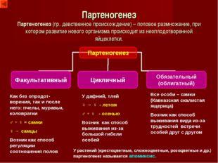Партеногенез Партеногенез (гр. девственное происхождение) – половое размножен