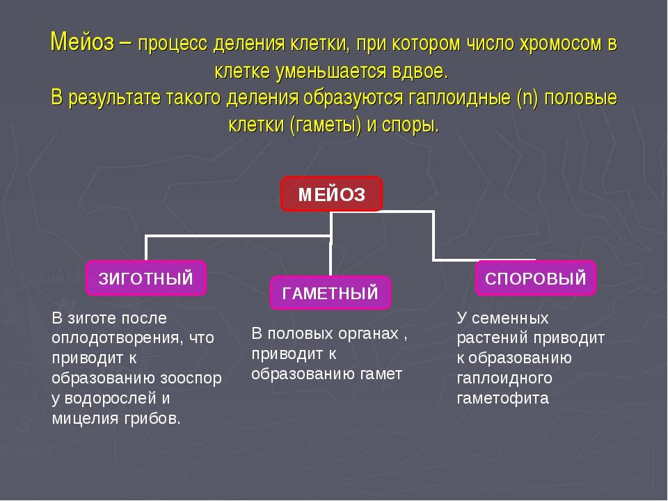 Мейоз – процесс деления клетки, при котором число хромосом в клетке уменьшает...