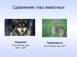 Сравнение глаз животных Хищники Угол обзора глаз 206° - 240° Травоядные Угол