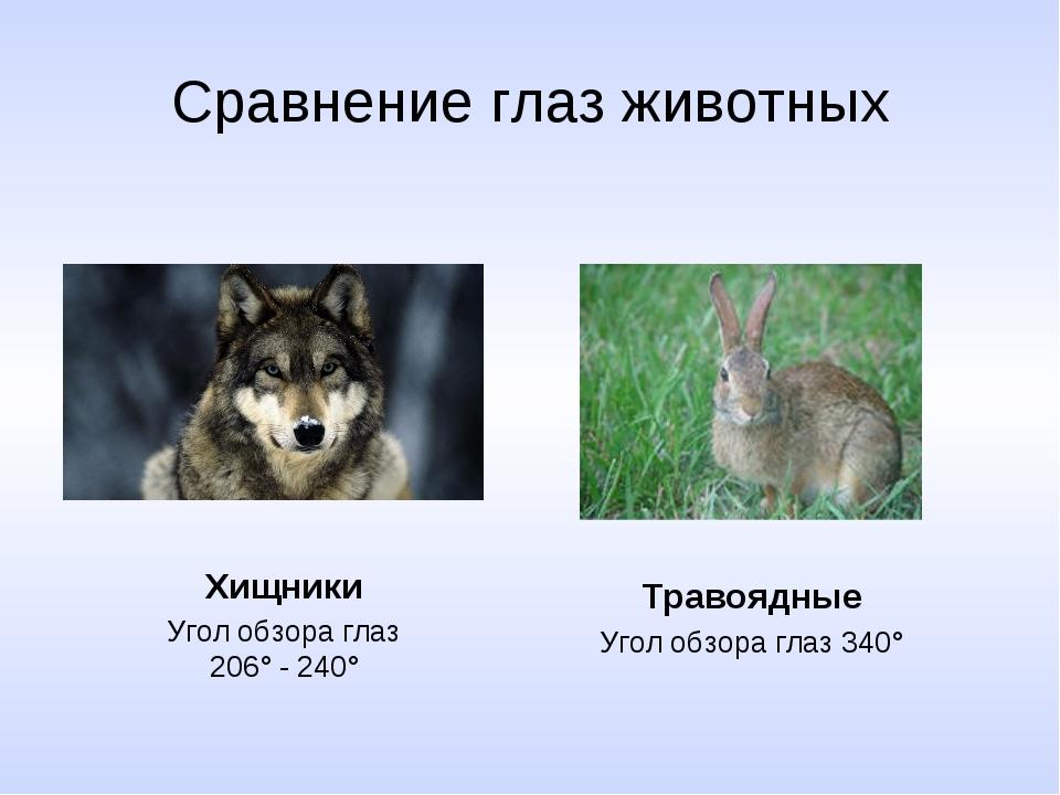 Сравнение глаз животных Хищники Угол обзора глаз 206° - 240° Травоядные Угол...